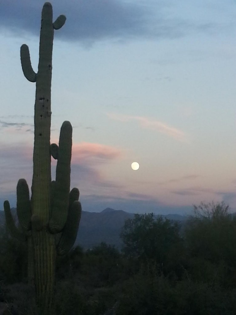 Cactus and Moon